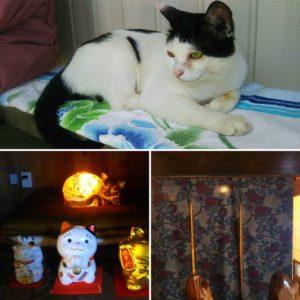 ちび猫、暖簾、電飾猫(?)
