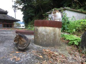 右向け~右の猫達