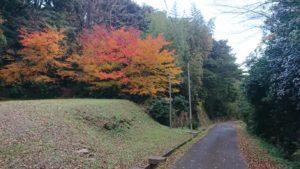 常緑樹の前の紅葉が美しい。