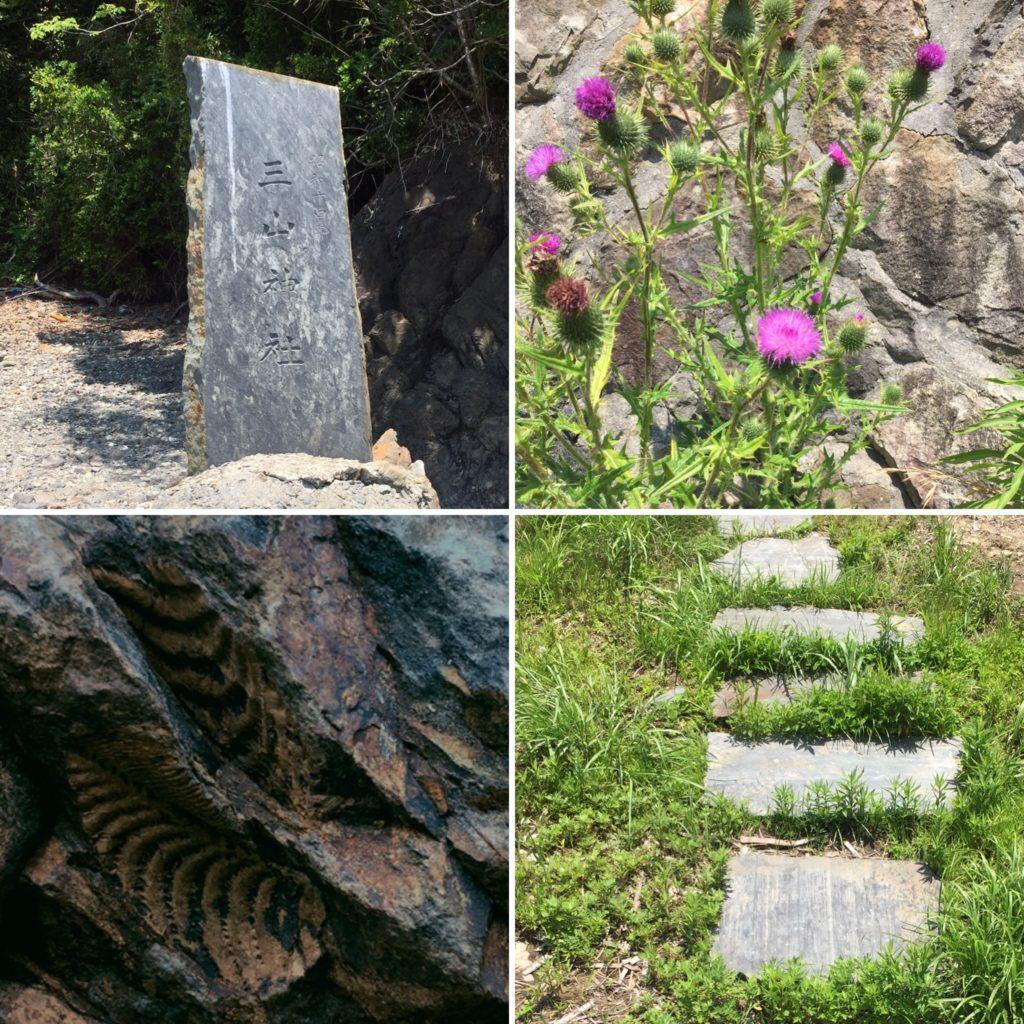 昭和14年の建立の三山神社の石碑、港近くに咲く野アザミ、化石、雄勝石の飛び石・・・大泊港周辺で撮影