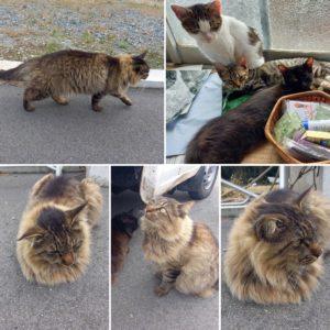 田代島の猫達