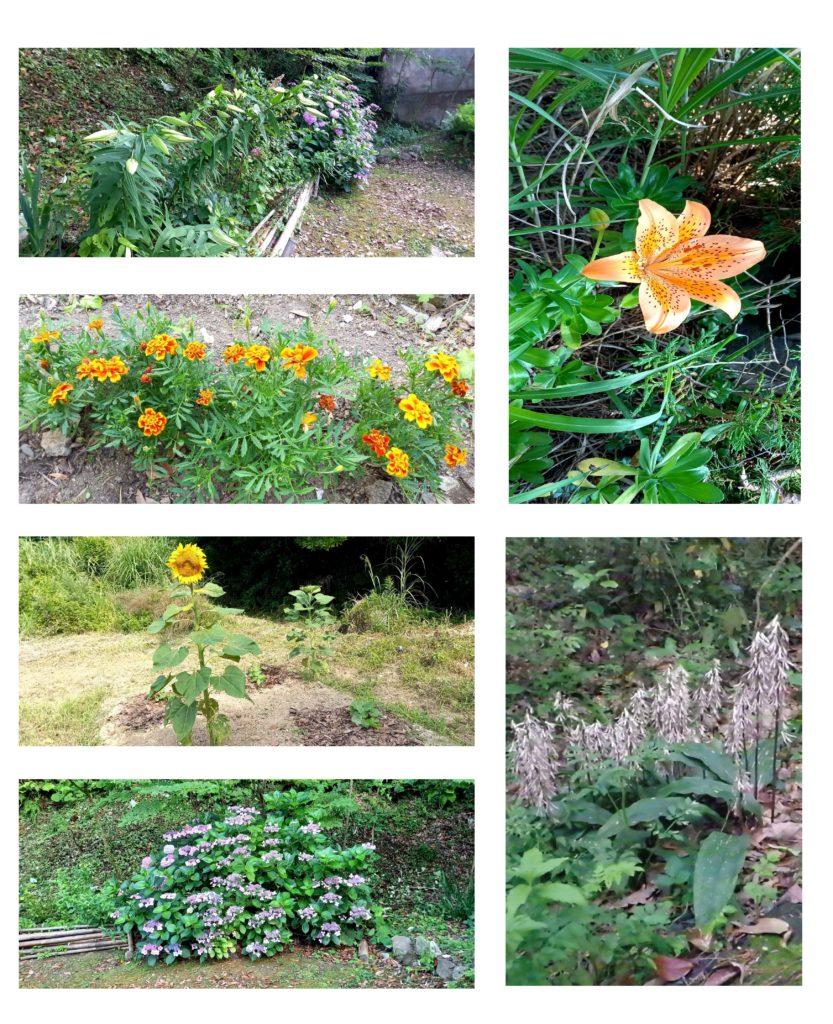 田代島の花(7月)